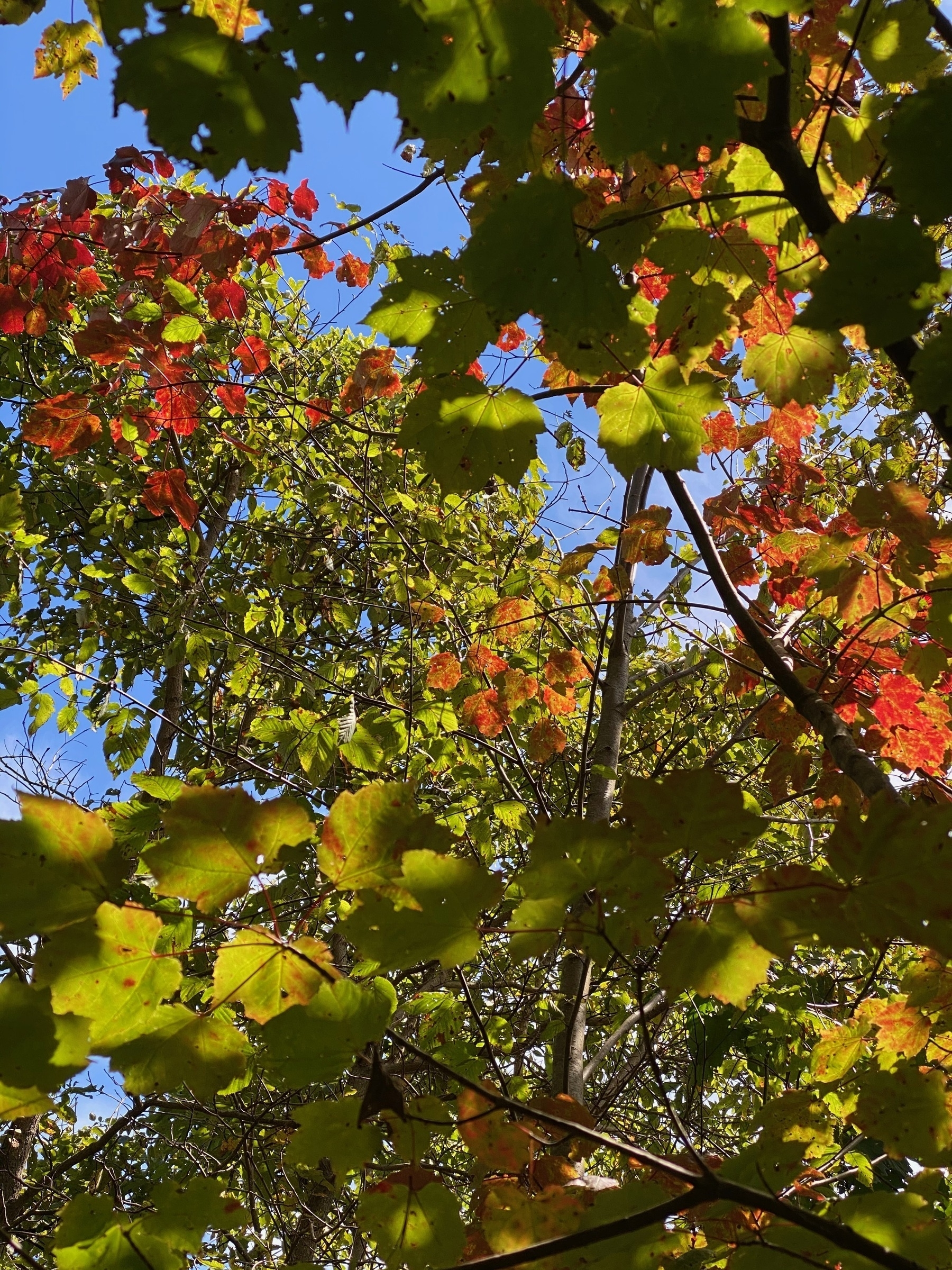 Leaves changing color.